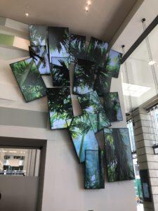 Samsung Display Wand Palmenhintergrund